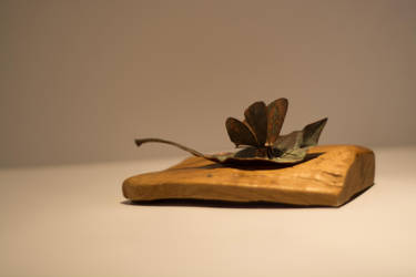 A Still Life Photograph Of A Copper Butterfly by ianwh
