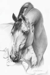 Arabian Horse by CaldeiraSP
