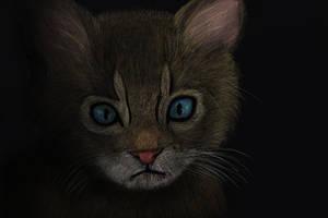 Kitten in the Darkness by oboeteru