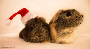 Christmas piggies ! by JustLikeSnow