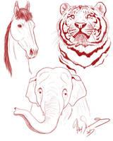 Animal Sketches by AnimalArt98