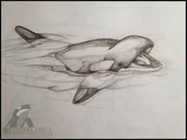 pencil sketch of orca by Britannia-Orca