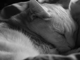 Cat Nap 2012 by MoesArts