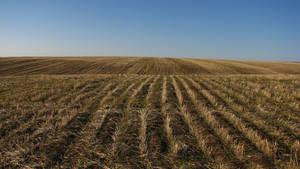 Cut Wheat Field by FoxStox