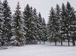 White forest by Astragami-sama
