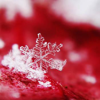 Bleeding Snowflake by Kara-a