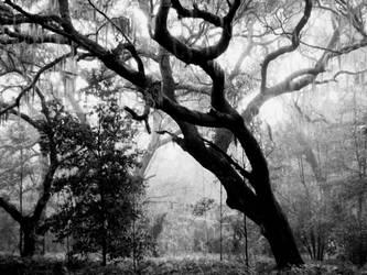 Whispering Oaks II by CanoeGuru