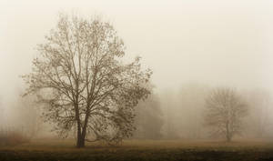 Arbre de la brume by k-simir
