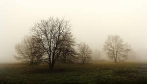 Arbre de la brume 2 by k-simir
