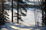 Winter 2019,Tuulos,Finland by nevotex