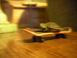 Did ya'll know that turtles can skatebored? by Chiracy