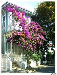 pink flowered house by kibafull
