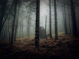Mysterious Forest II by kachahaha