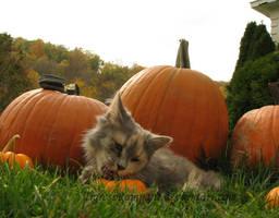Pumpkin Attack by TigressRampant