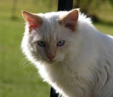 :Bumble Stare: by TigressRampant