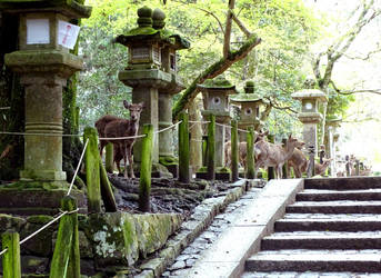 Les cerfs Sika, esprits de Nara by ktulukru