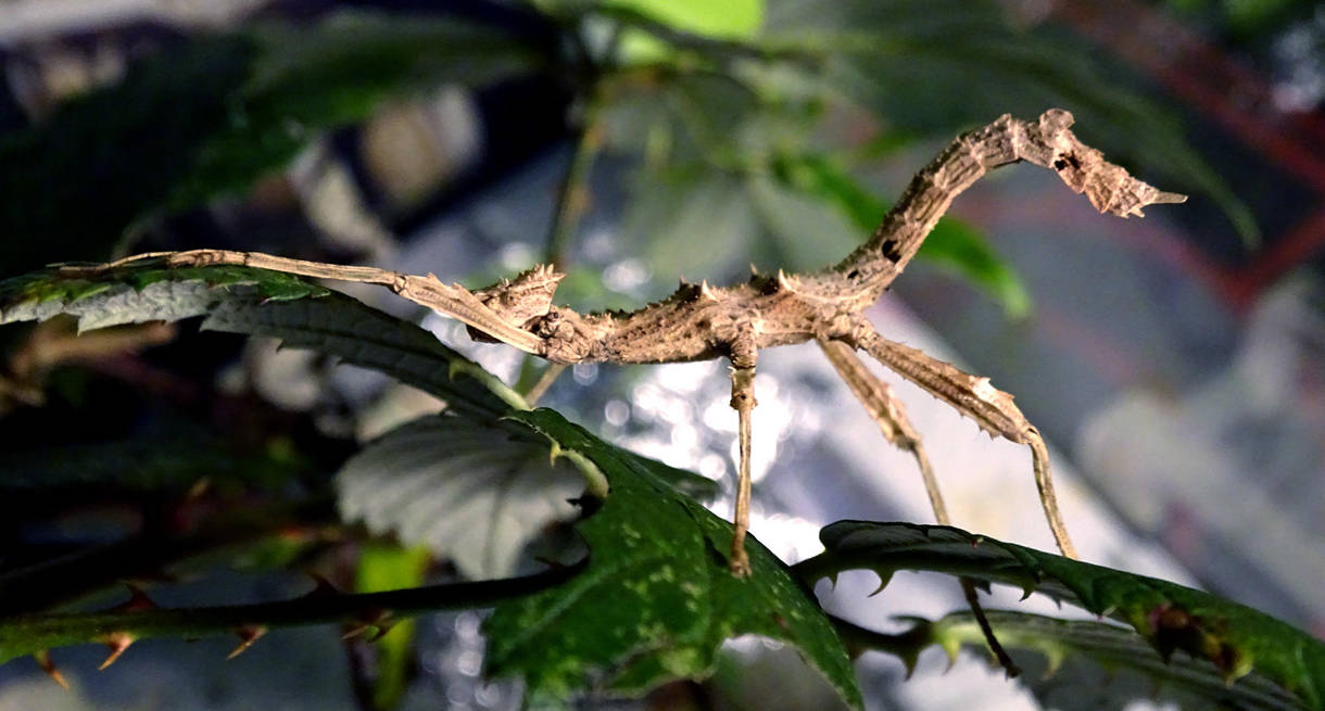 Sungaya playing a twig by ktulukru