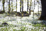 Field of white by reaktionista