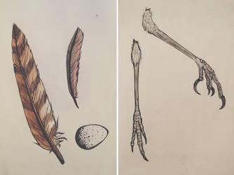 Bird Bits by KiwiSeahorse