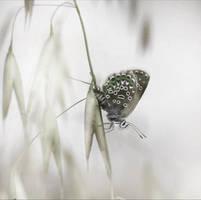 White II by Callu