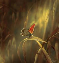 Sistine Light by Callu