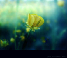 May Evening II by Callu
