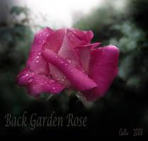 Back Garden Rose by Callu