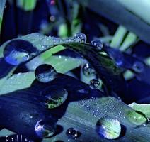 Bleu Graphique by Callu