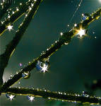 Light Orbs by Callu