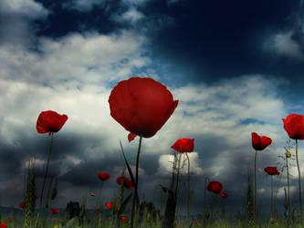 Light Red by Callu
