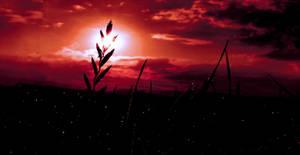 Night Dew Shimmering by Callu