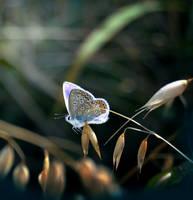 Blue Garden Jewel II by Callu