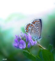 Mic Fluture by Callu