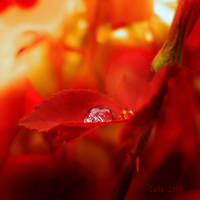 Scorillo Blood Red by Callu
