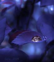 Black Shine Blue by Callu