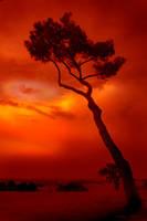 Nero's Burning Rome by Callu