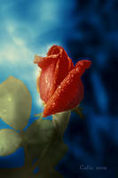 Rose The Other by Callu