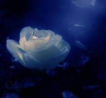Blue Transparency II by Callu