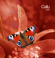 Natural Red by Callu