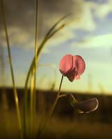 Wild Flower by Callu