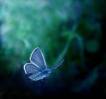Hidden in the Blues by Callu