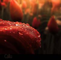 Morning Rain Reshaded by Callu