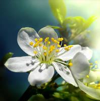 Spring Wish Reshaded by Callu