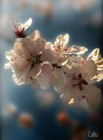 Flori de Mai reshaded by Callu