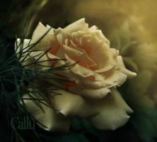 Galben Doi by Callu
