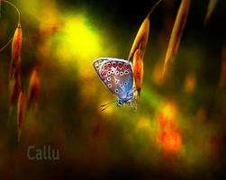 Tiny 5c by Callu