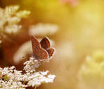 Butterfly Three by Callu
