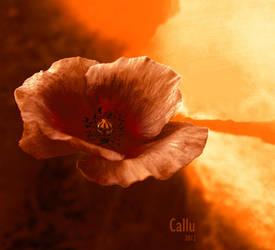 MMXIII a by Callu