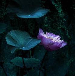 Dark Blue Shadow by Callu