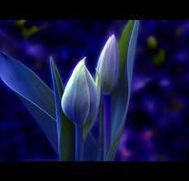 In the Garden by Callu